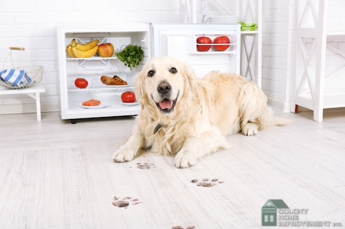 Create a pet-friendly home with remodeling contractors.